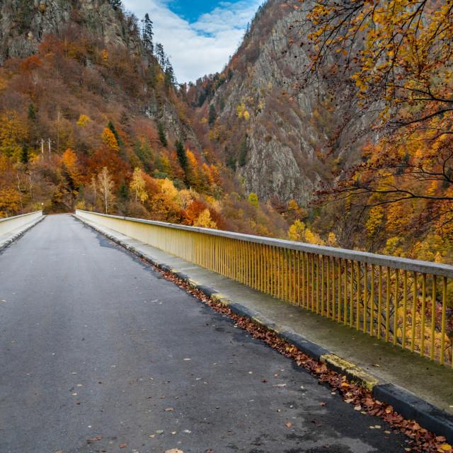 """Path to Autumn"" stock image"