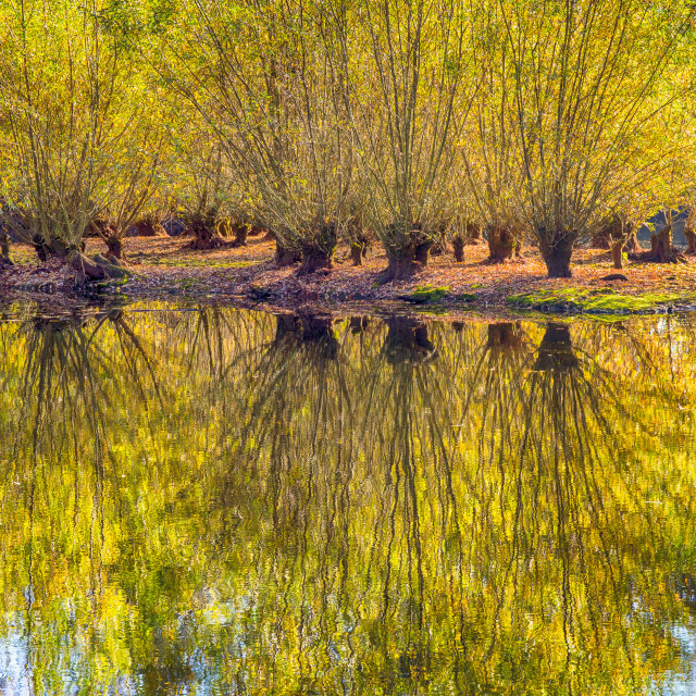 """Autumn Reflections, River Stour"" stock image"