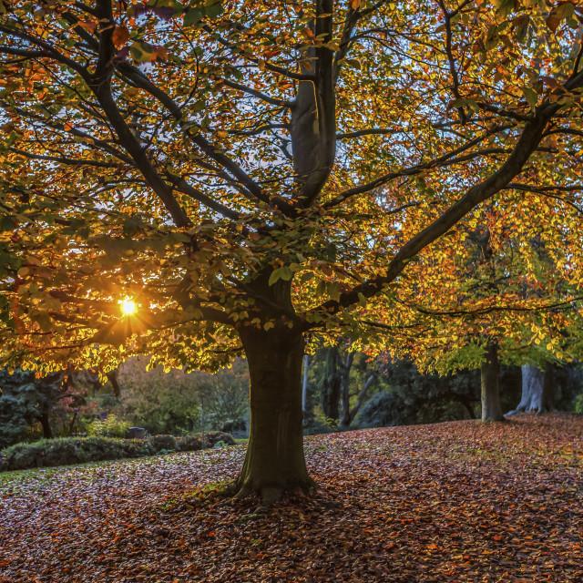"""""""Autumn Sun."""" stock image"""