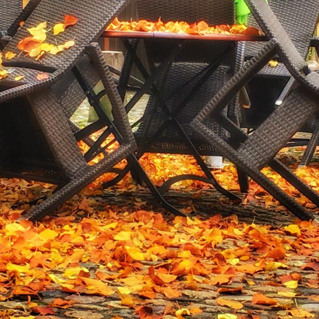 """Autumnimpression"" stock image"