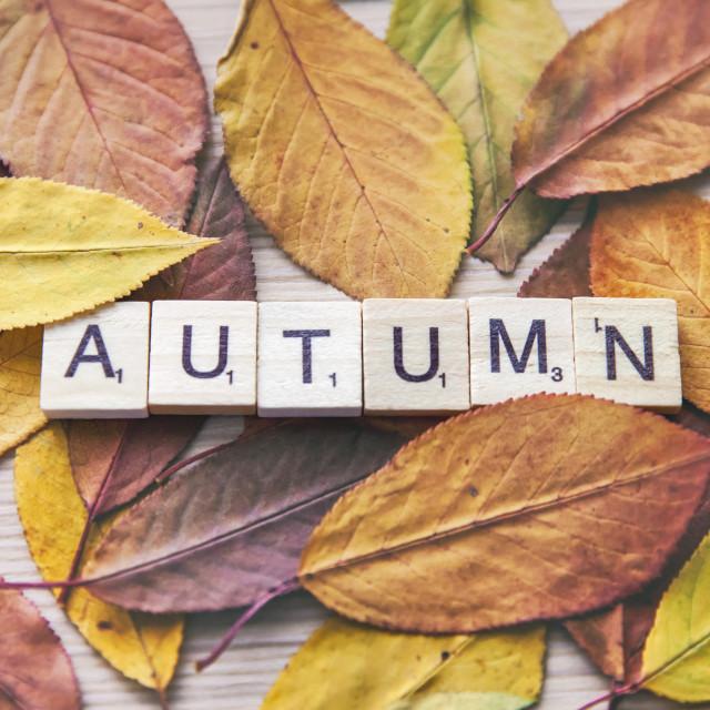 """""""Autumn season"""" stock image"""