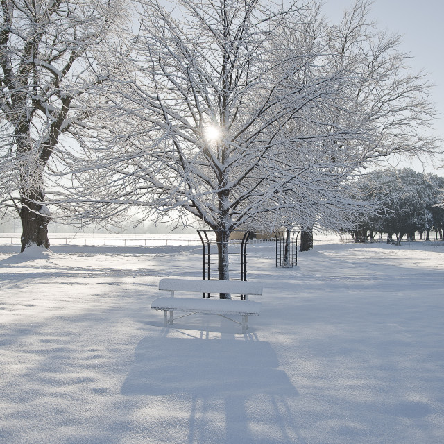 """Winter in park."" stock image"