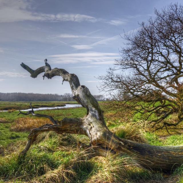 """""""The Serpent of Alresford"""" stock image"""