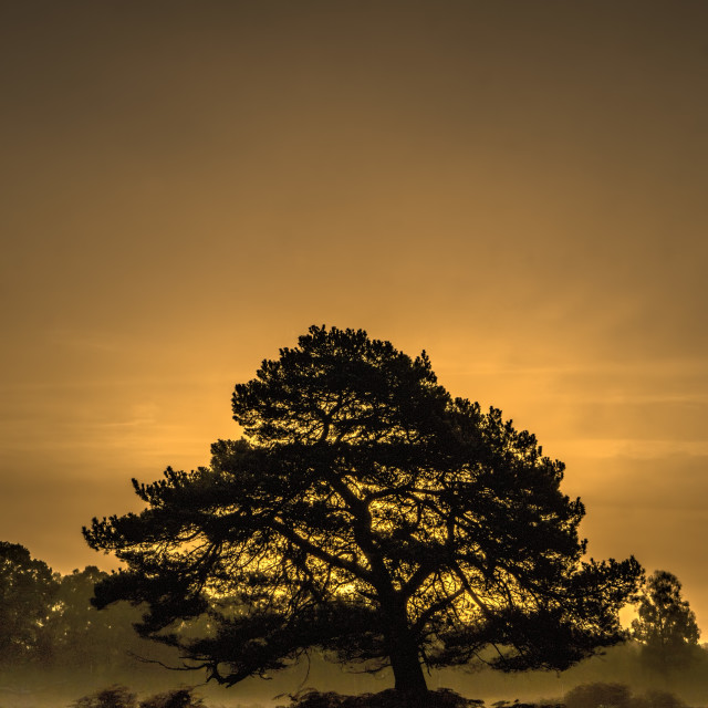 """Tree at Bolderwood, New Forest"" stock image"