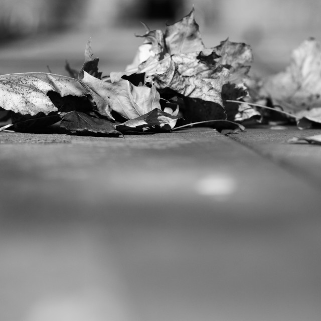 """Black and White Picnic Leaves"" stock image"