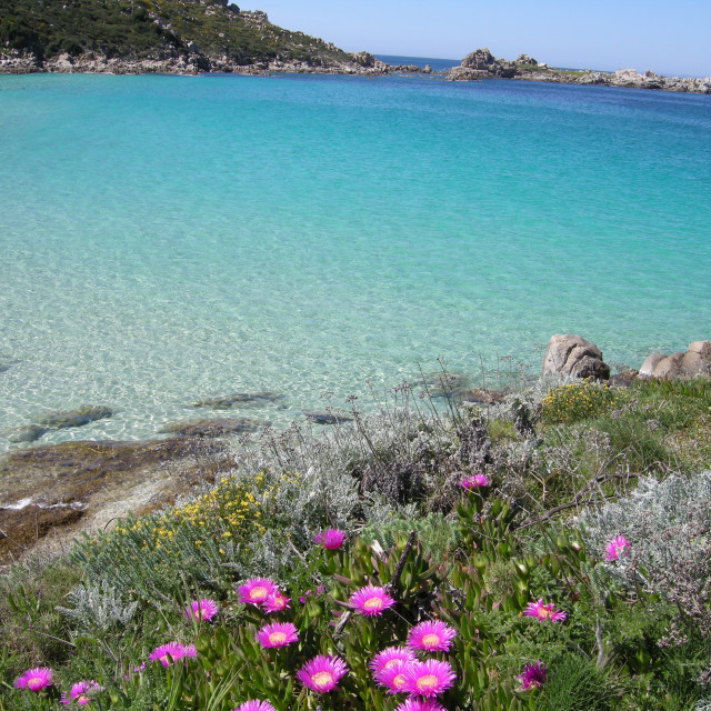 """Spring in Sardinia"" stock image"
