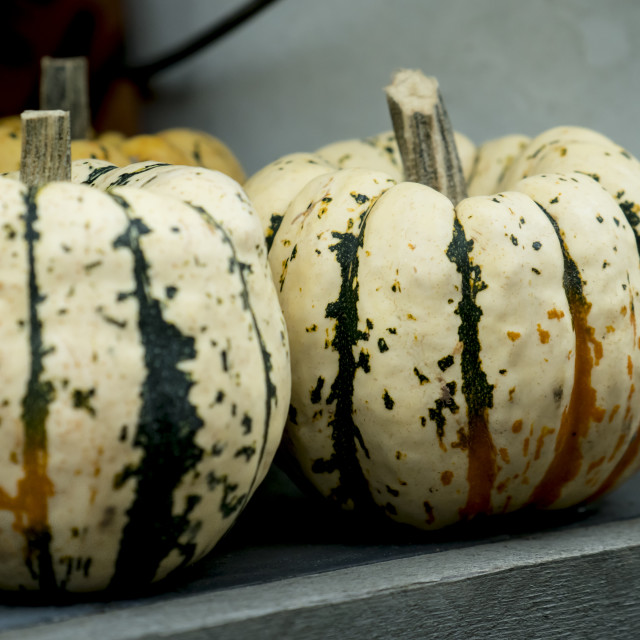 """""""Small pumpkins on a wooden table on display outside a shop."""" stock image"""