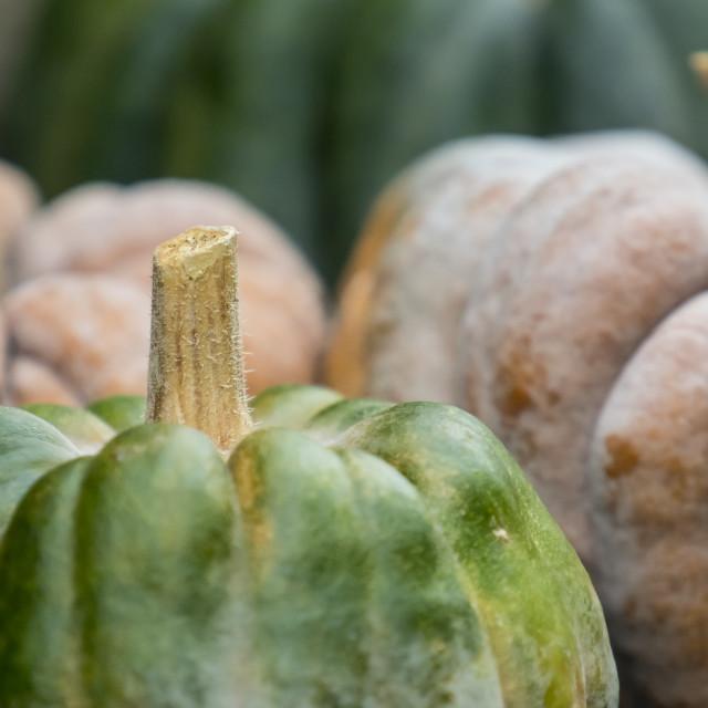 """""""Three pumpkins on display"""" stock image"""