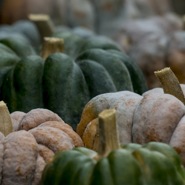"""Pumpkin on display 3"" stock image"