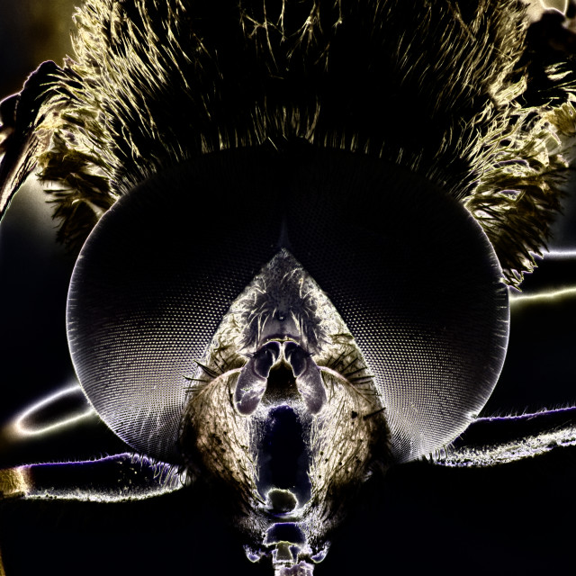 """""""Micro Photo of a Hoverfly"""" stock image"""