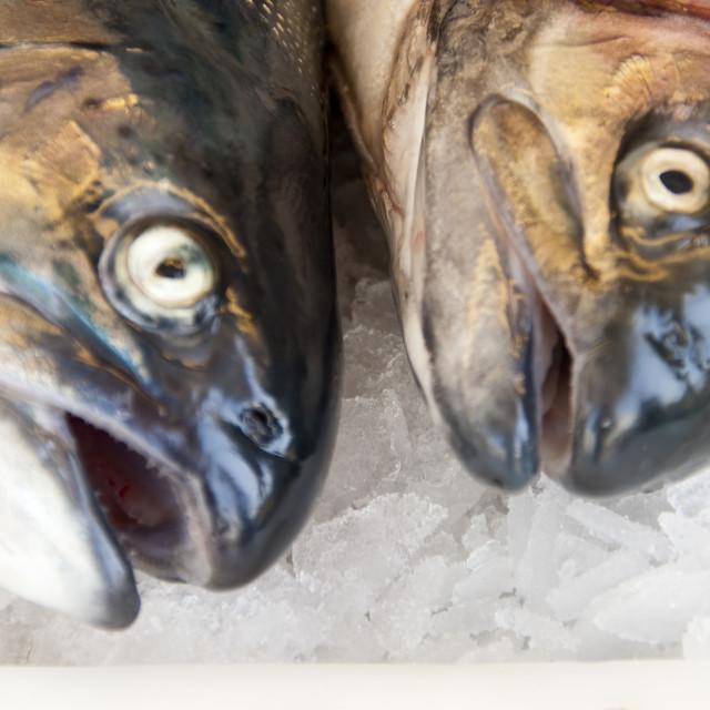 """salmons"" stock image"