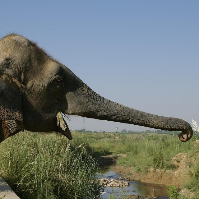 """Save the elephants"" stock image"