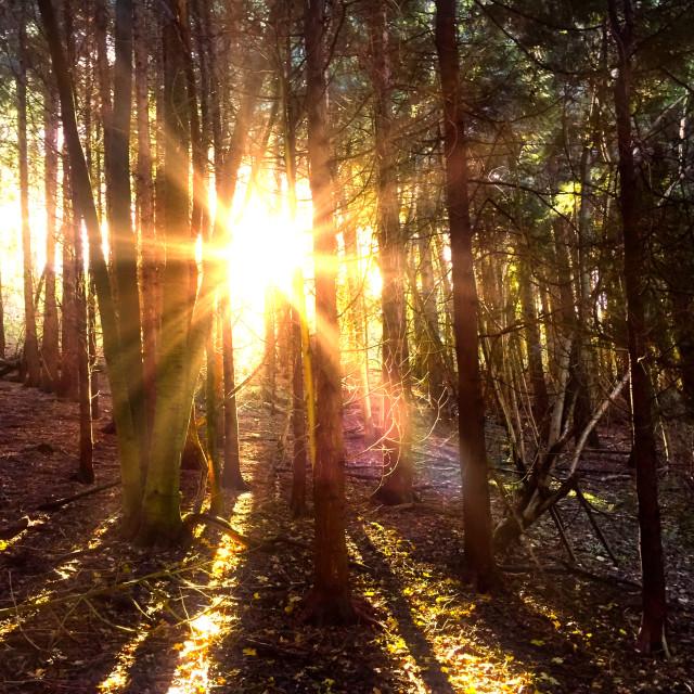 """Sunlight through the trees"" stock image"