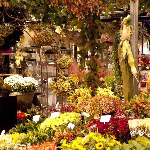"""flower market in amsterdam"" stock image"