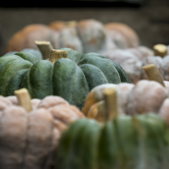 """Pumpkin on display 1"" stock image"