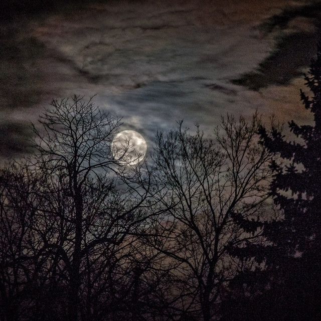 """Super Moon thru trees"" stock image"