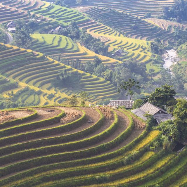 """Terraces In Northwest VietNam"" stock image"