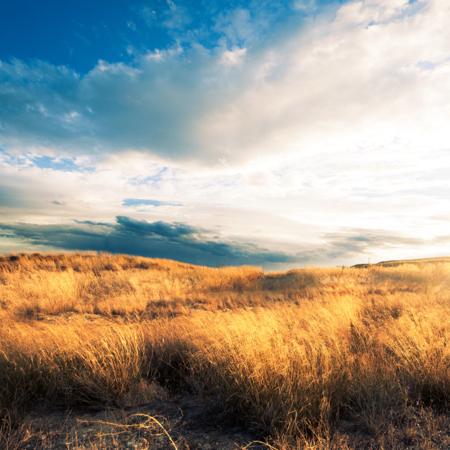 """""""Sunset landscape.Fields and hill"""" stock image"""