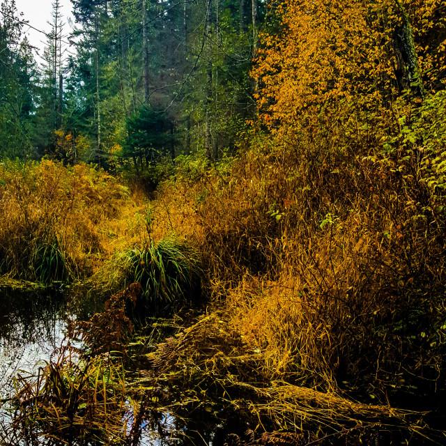 """YellowPoint Marsh"" stock image"