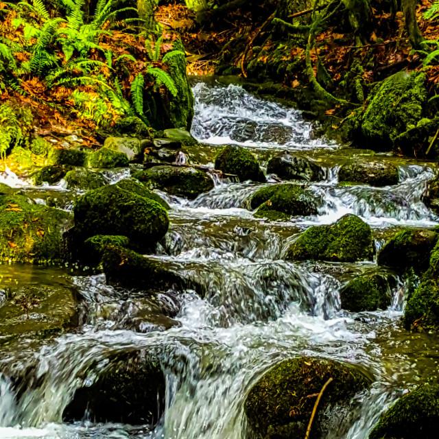 """""""Bings Creek"""" stock image"""