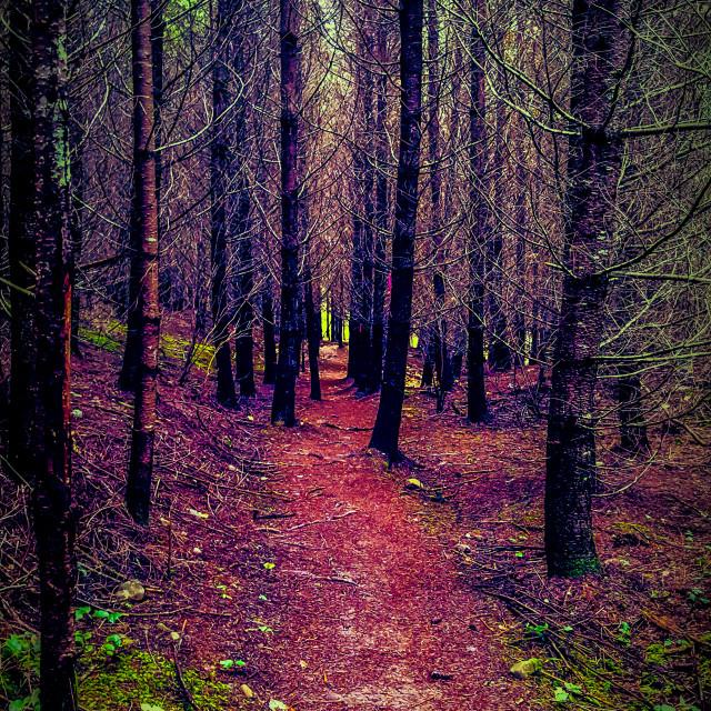 """Creepy burnt forest"" stock image"