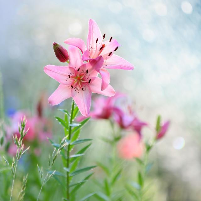 """In my garden"" stock image"