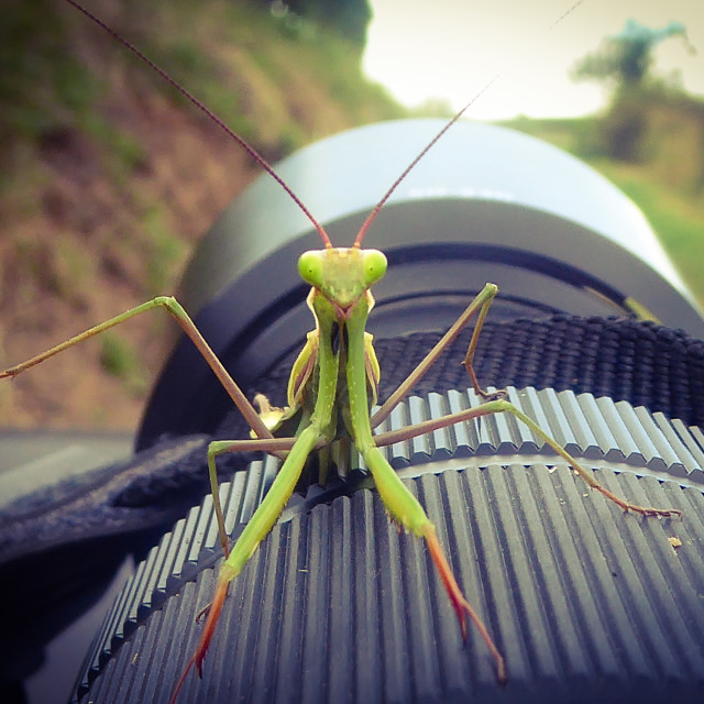 """""""Insect"""" stock image"""
