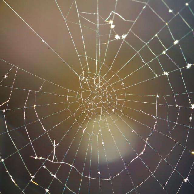 """Spider Web"" stock image"