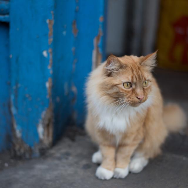 """Camden Cat"" stock image"