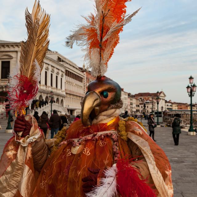 """""""Strutting in Venice"""" stock image"""