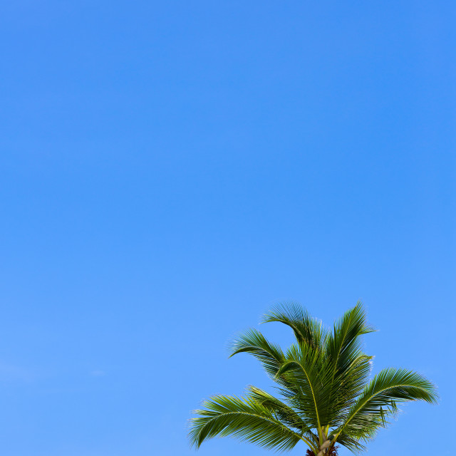 """Palm tree and blue sky"" stock image"