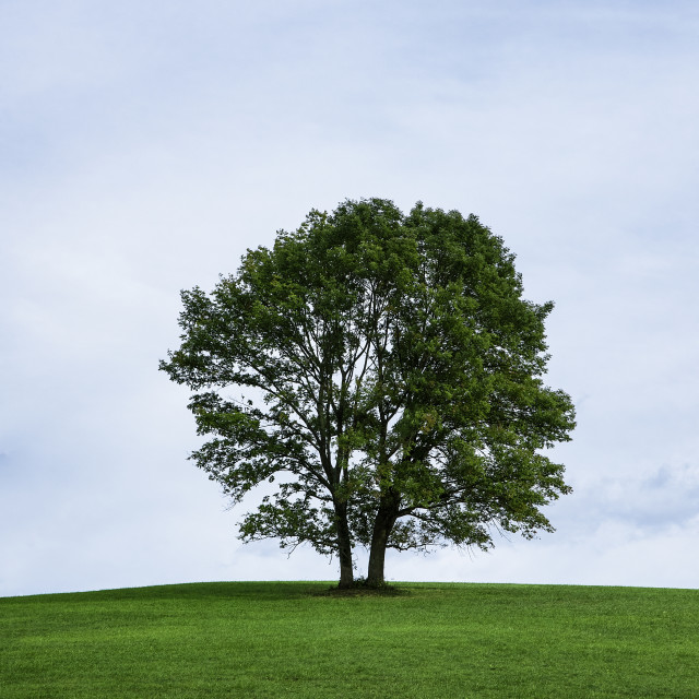 """Lone tree on a hill, Stroud Preserve, Pennsylvania, USA"" stock image"