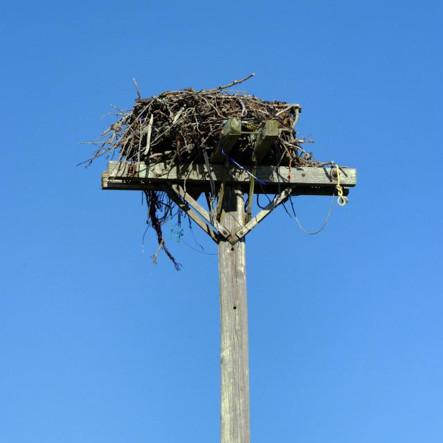 """Osprey nest"" stock image"