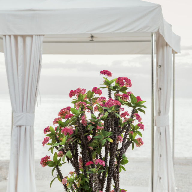 """Spa tent tropical flower overlooking the ocean"" stock image"