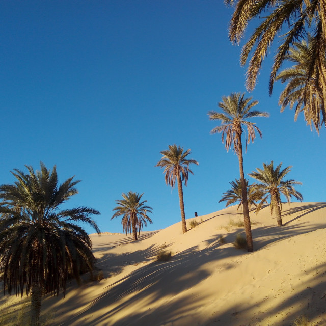 """Sand dunes and oasis of palm"" stock image"