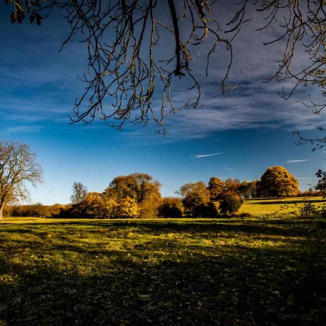 """""""Rural landscape"""" stock image"""