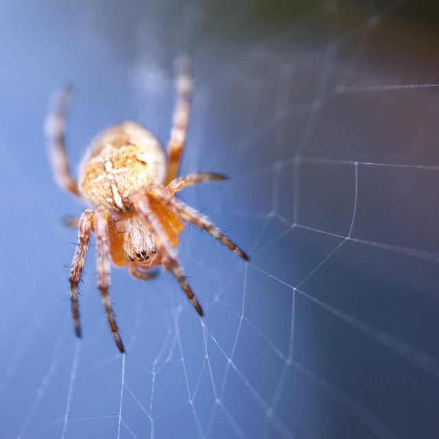 """Spider/Web"" stock image"