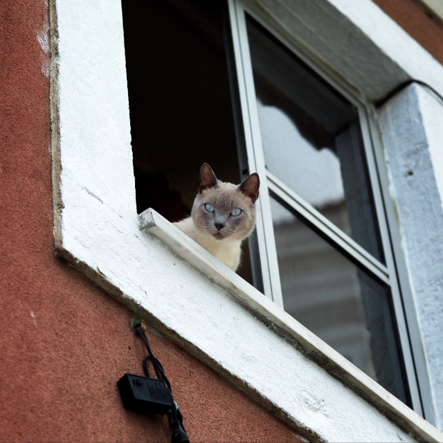 """Lisbon Window Cat"" stock image"