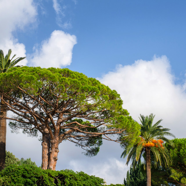 """""""Tropical Trees"""" stock image"""