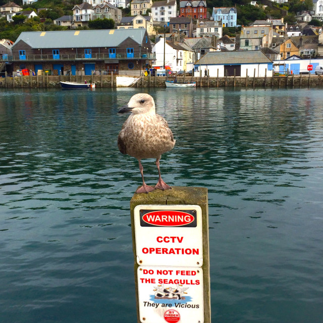 """Warning CCTV Operation Sign do not feed the seagulls they are vicious."" stock image"