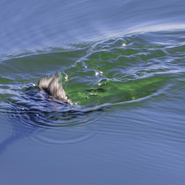 """Duck dive"" stock image"
