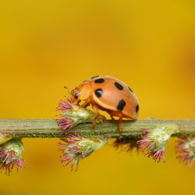 """""""Lady Bug"""" stock image"""