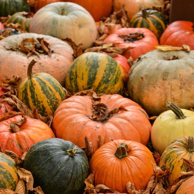 """Diverse assortment of pumpkins on background. Autumn harvest."" stock image"