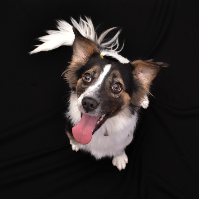 """Dog looking up with big hazel eyes"" stock image"