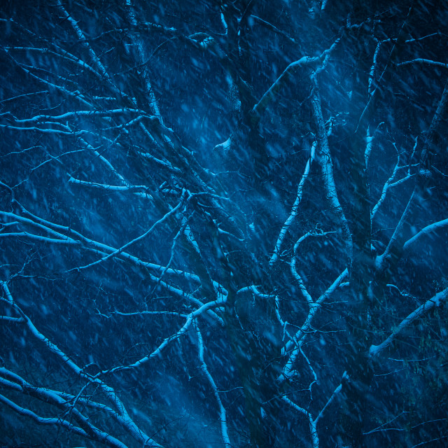 """""""Tree in the snow at night on blue"""" stock image"""