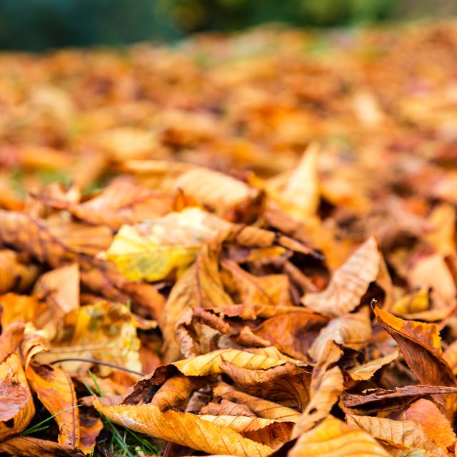 """""""Autumn season theme"""" stock image"""