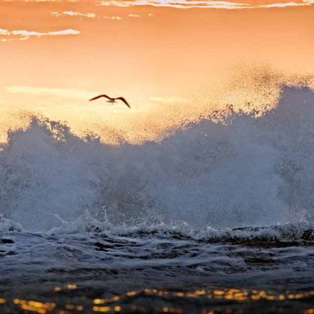 """Seagull over waves"" stock image"
