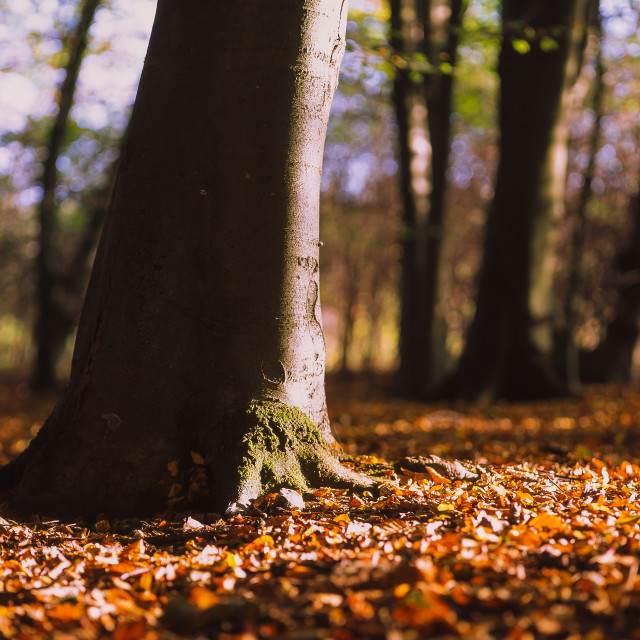 """""""Morning Light on the Forest floor"""" stock image"""