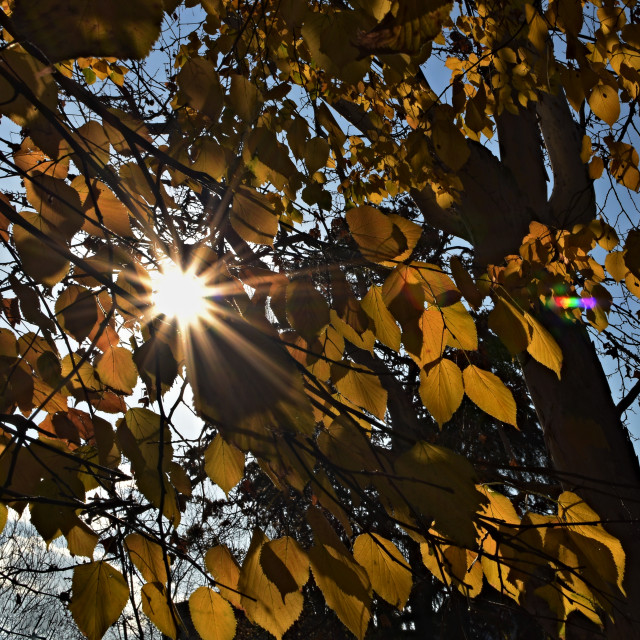 """Sunlight Through Leaves"" stock image"