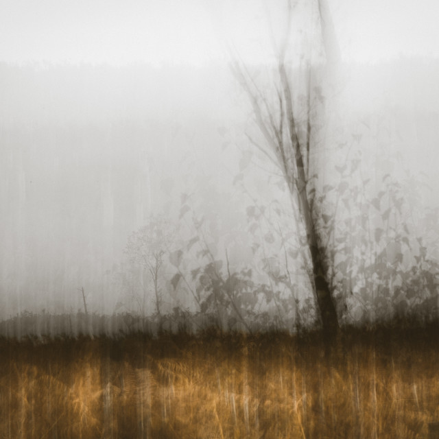 """""""After Autumn"""" stock image"""